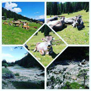 Wandern in den Bergen in Tirol